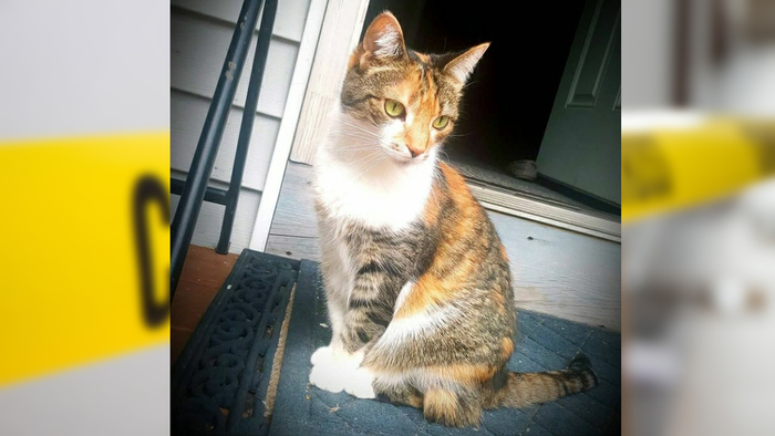 Family cat killed by stray bullet through window in Connecticut