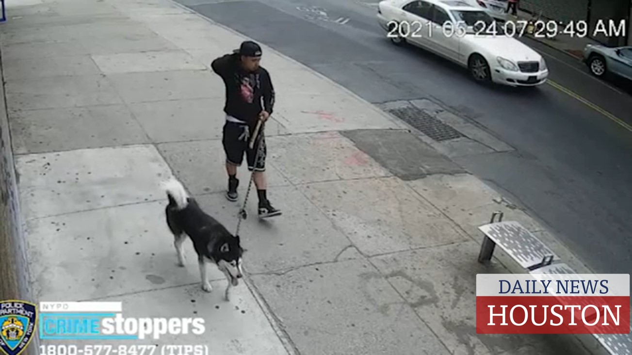 Man suspected of using his dog to lure girls in Brooklyn