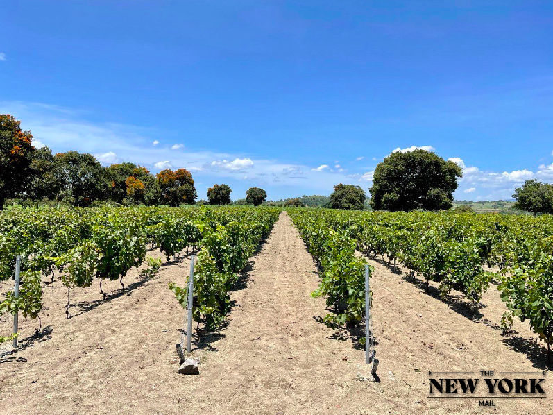 Pinot Noir in Puebla, a wine of excellence plus socially responsible: Miguel Hernández